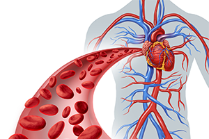 graphic of a human heart with veins and one blood vessel coming towards the screen with blood cells inside