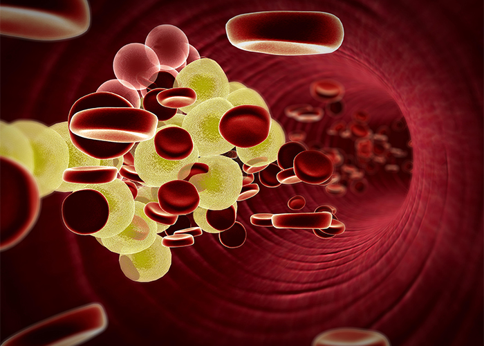 illustration of fat cells in the bloodstream