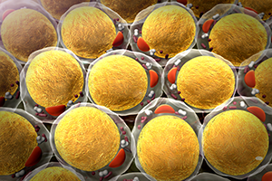 graphic of fat cells